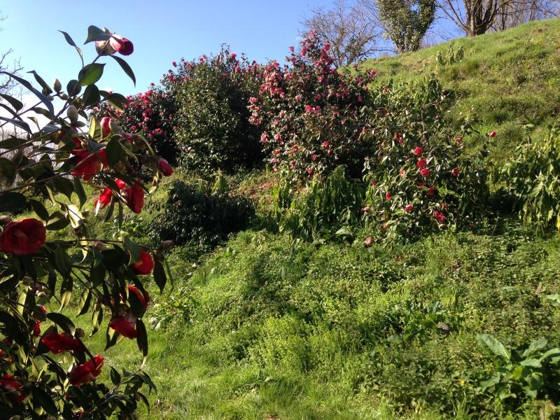 (40) Plantarium et chemin de ronde - Gaujacq 687706IMG0477