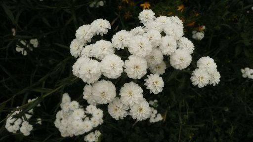 les plantes que je propose 691148P1010793JPG