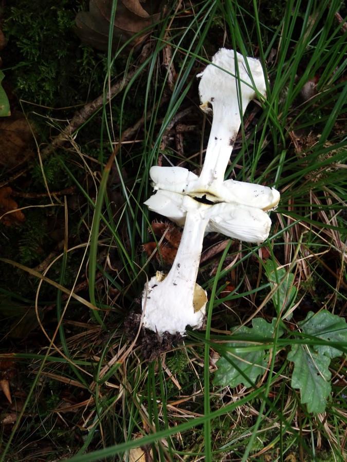 [fil ouvert] les champignons 691258015Copier