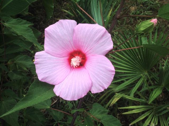j'ai descendu dans mon jardin - Page 6 698383IMG0313