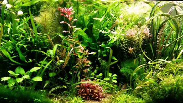 Mes (plus) de 60 plantes dans mon 240 litres - Page 6 699293201412071938081