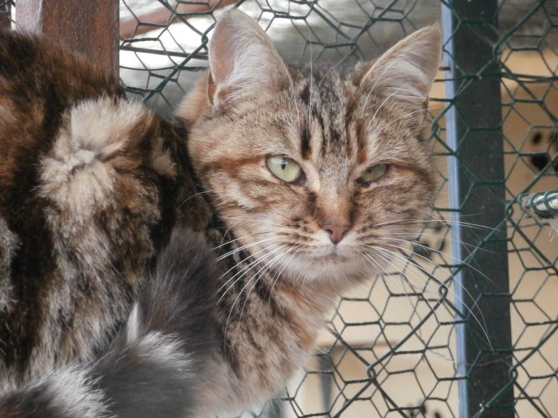 POMME ( femelle tigrée ) 704573P1212096