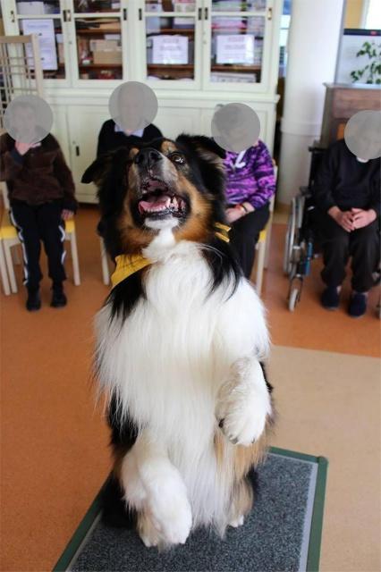 Impact du chien sur la santé humaine - Page 3 709139dustyok