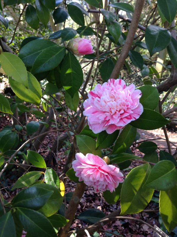 (40) Plantarium et chemin de ronde - Gaujacq 714284IMG0462