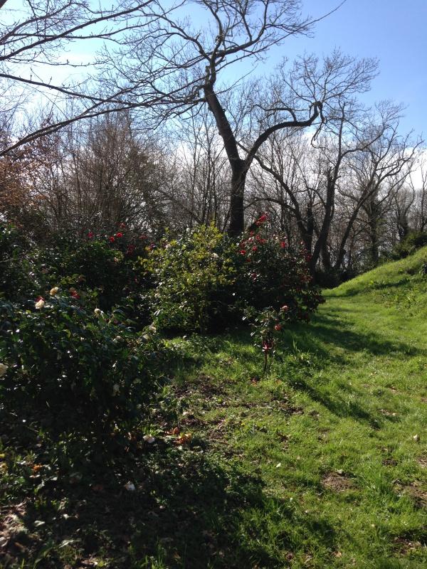 (40) Plantarium et chemin de ronde - Gaujacq 722175IMG0476