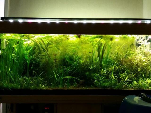 Mes (plus) de 60 plantes dans mon 240 litres - Page 5 72730220140920121707