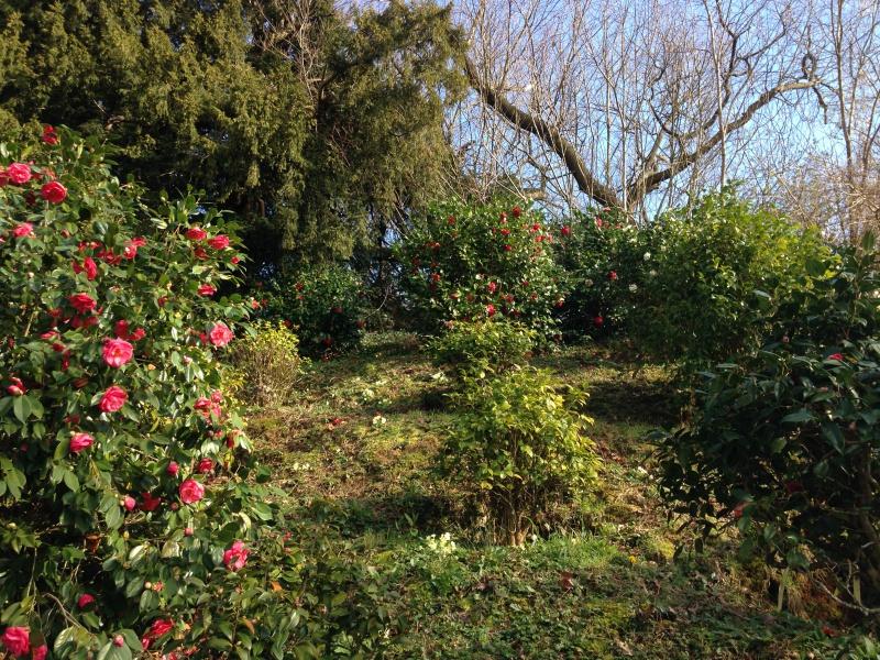(40) Plantarium et chemin de ronde - Gaujacq 729162IMG0525