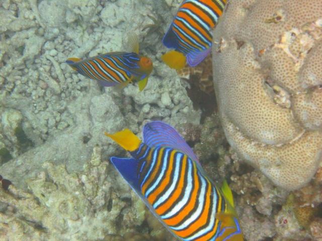 Quelques photos de mes dernières vacances (Maldives) 729634IMG2634