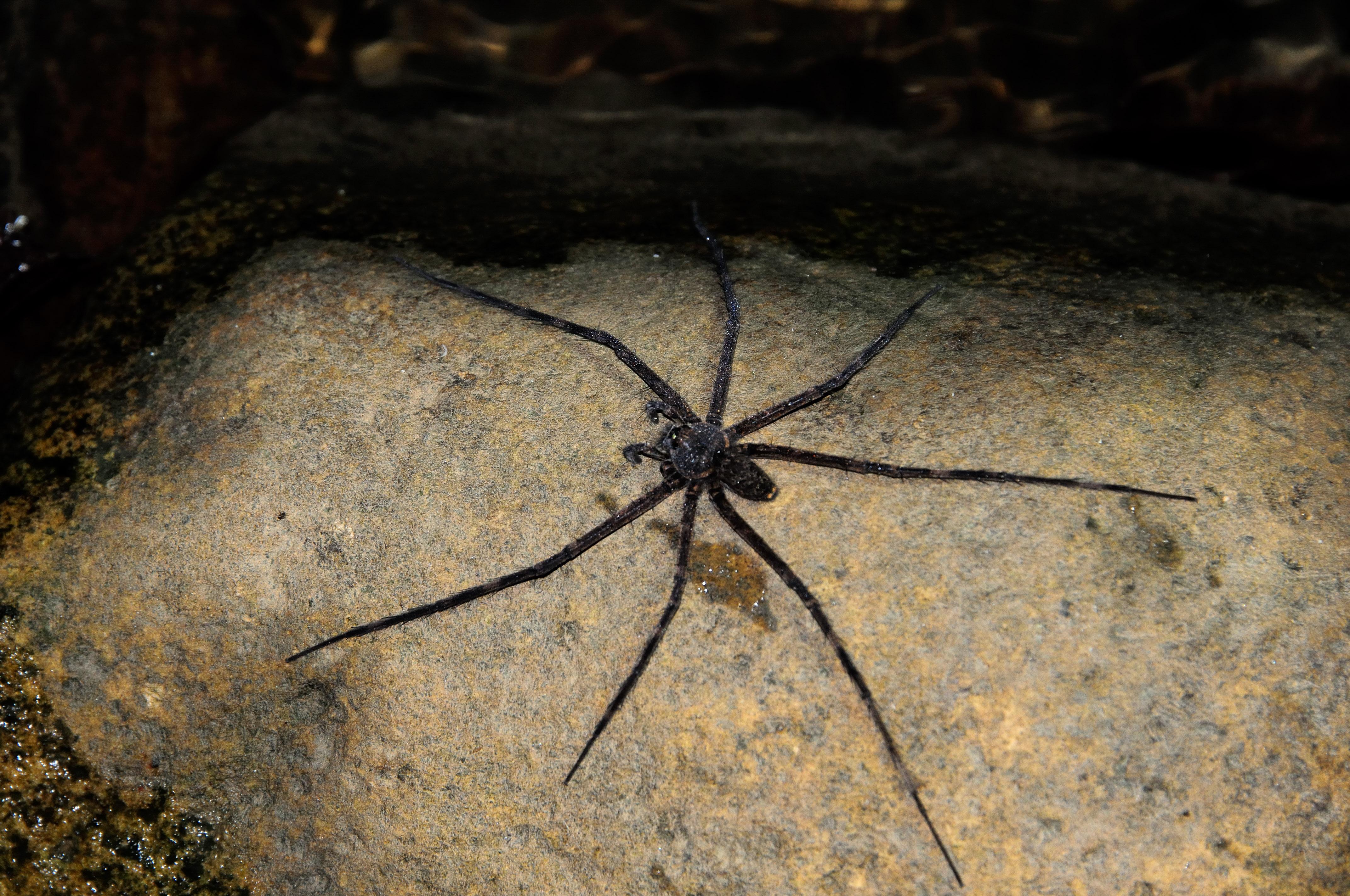 (FIL OUVERT à tous) vous aimez les araignées? 738823Equateur17482