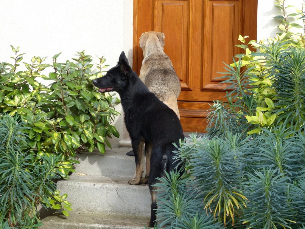 > Mika, un amour de petite chienne, née en mai 2011 - Adoptée 739800P1000091