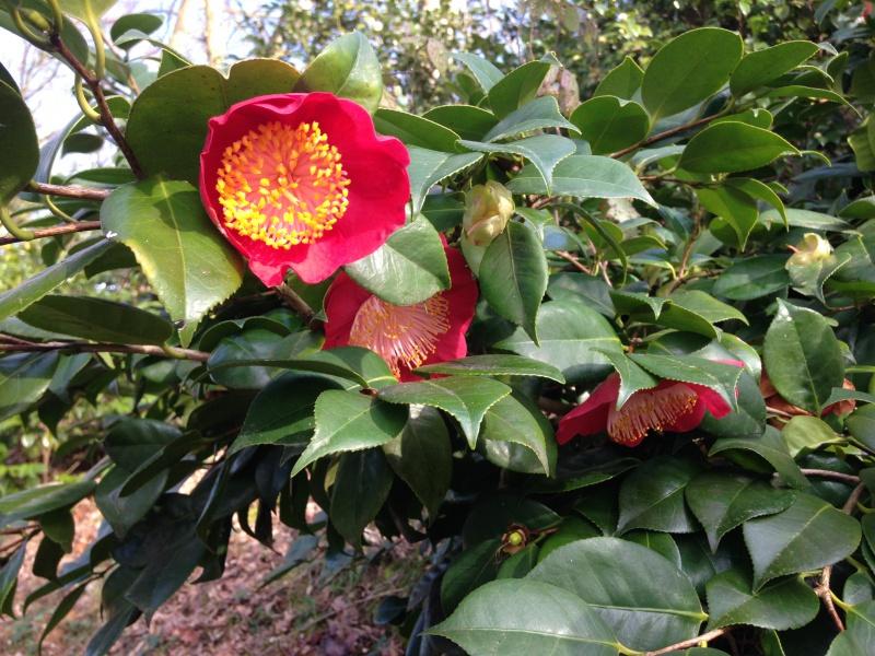 (40) Plantarium et chemin de ronde - Gaujacq 740700IMG0530