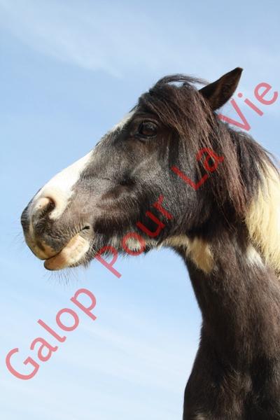 LOONY -  ONC poney né en 2001 - Adopté en juin 2011 par Carole 747161IMG4879