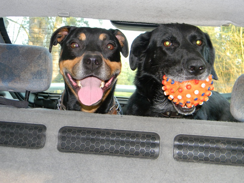 Photo de nos chiens batards! 750190DSCN3052