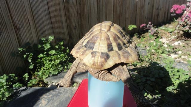 conseils pour aider une tortue-terra  752667platonsept20142