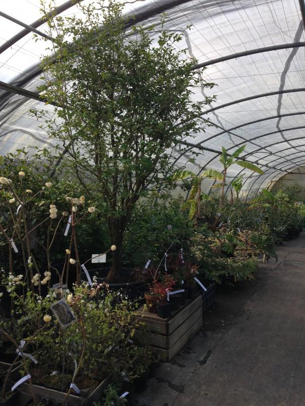 (40) Plantarium et chemin de ronde - Gaujacq 754327IMG0536