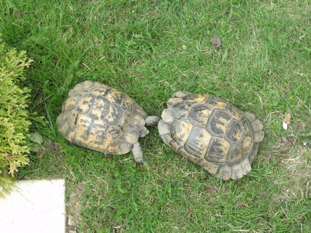 identification de 2 petites tortues  75744327