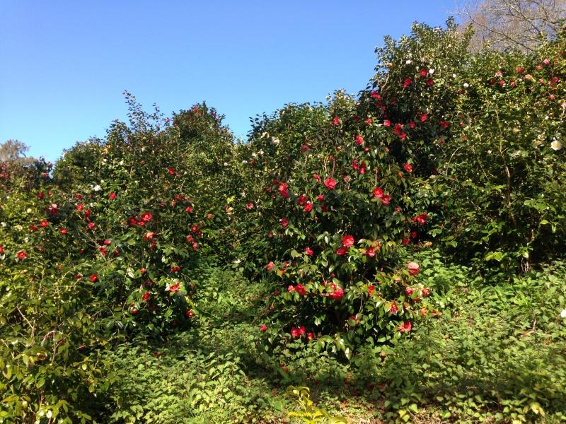 (40) Plantarium et chemin de ronde - Gaujacq 764554IMG0510