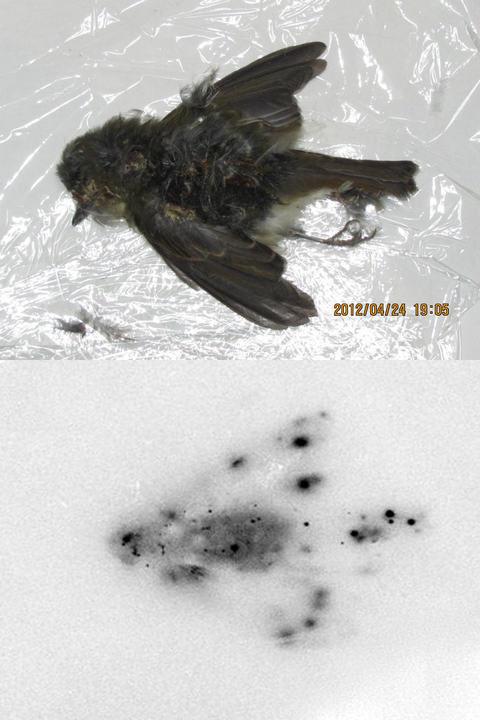 Le topic PUNK de doom - Page 5 766545fukushimabird42012