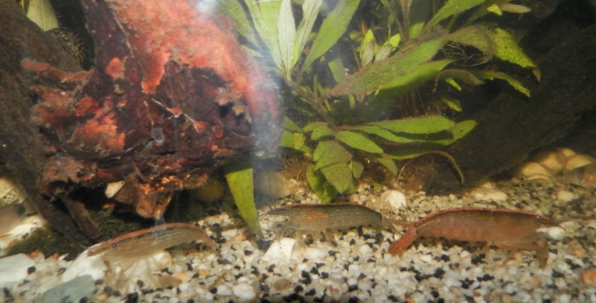 [Présentation] Tous les trous mènent aux crevettes Bambou 7747675022
