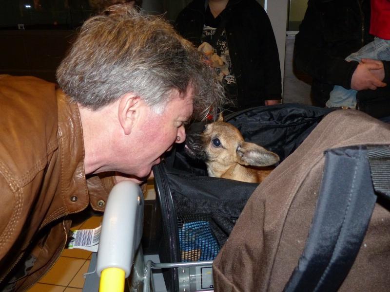 Betty, mini chien, soeur de Dixie 774814P1020943