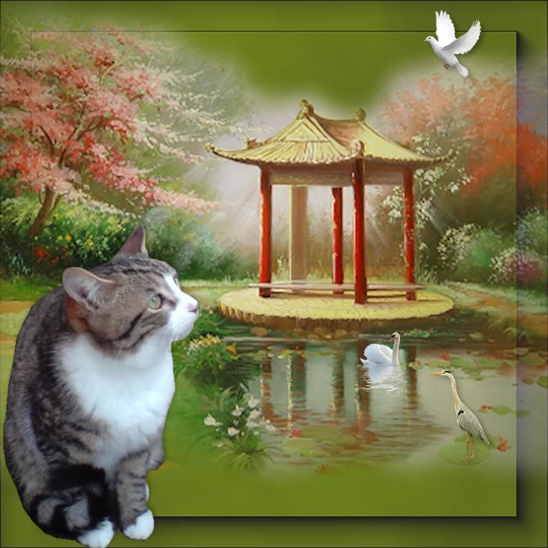 MIKA (chaton tigré et blanc) 789699Mika