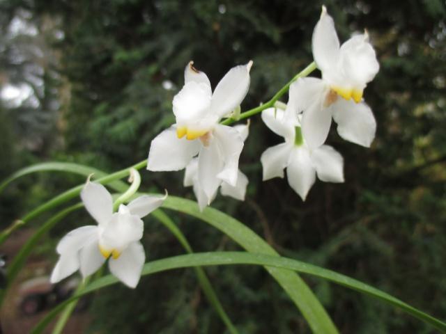INSCRIPTIONS - Catégorie Acquise en fleurs - Mars 2017 801196IMG0007