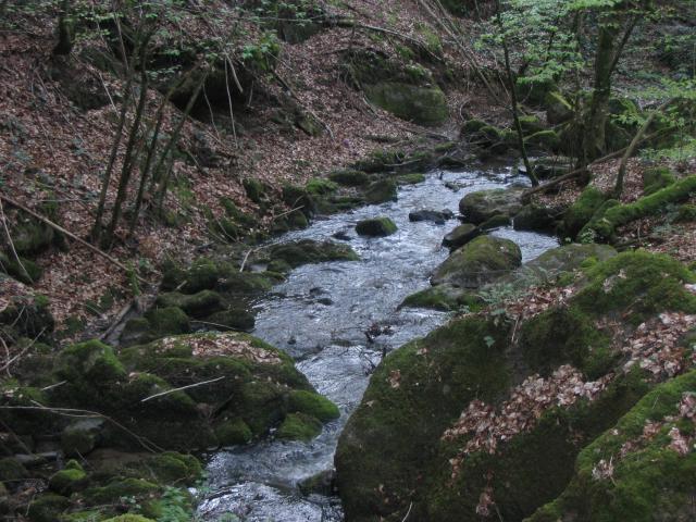 Ruisseau du Mayroux 801387IMG_5085