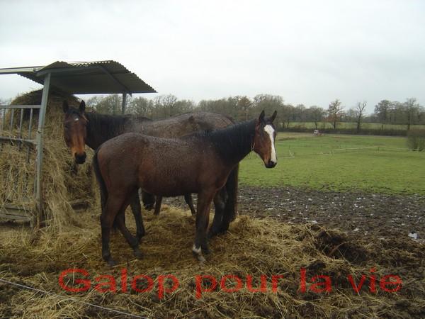 VICTORIO - PS né en 2009 - adopté en janvier 2011 par Margaux 805112bb6