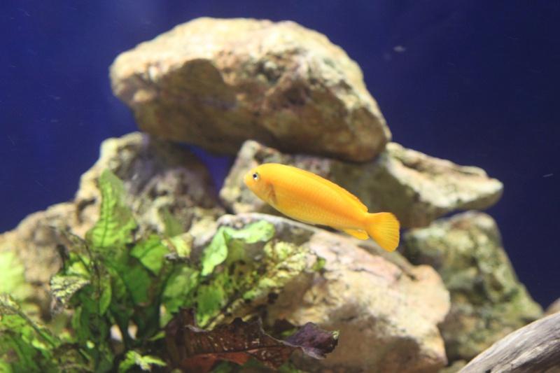aquarium de 2000L en bois - Page 2 805633IMG0010