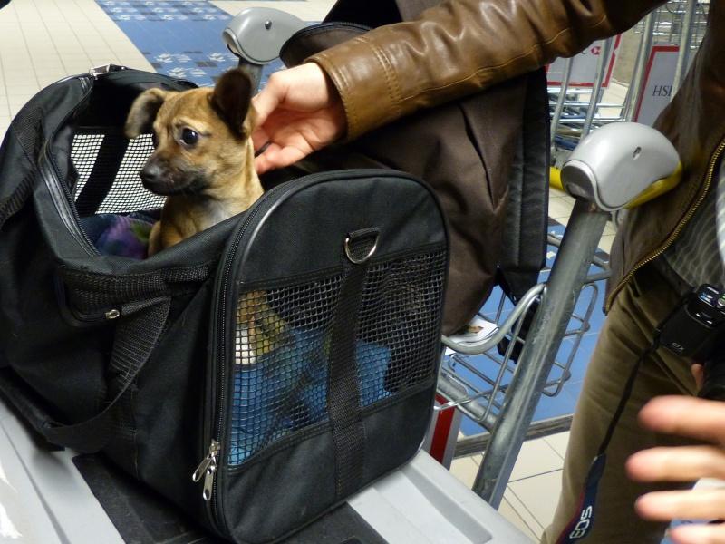 Betty, mini chien, soeur de Dixie 808607P1020952