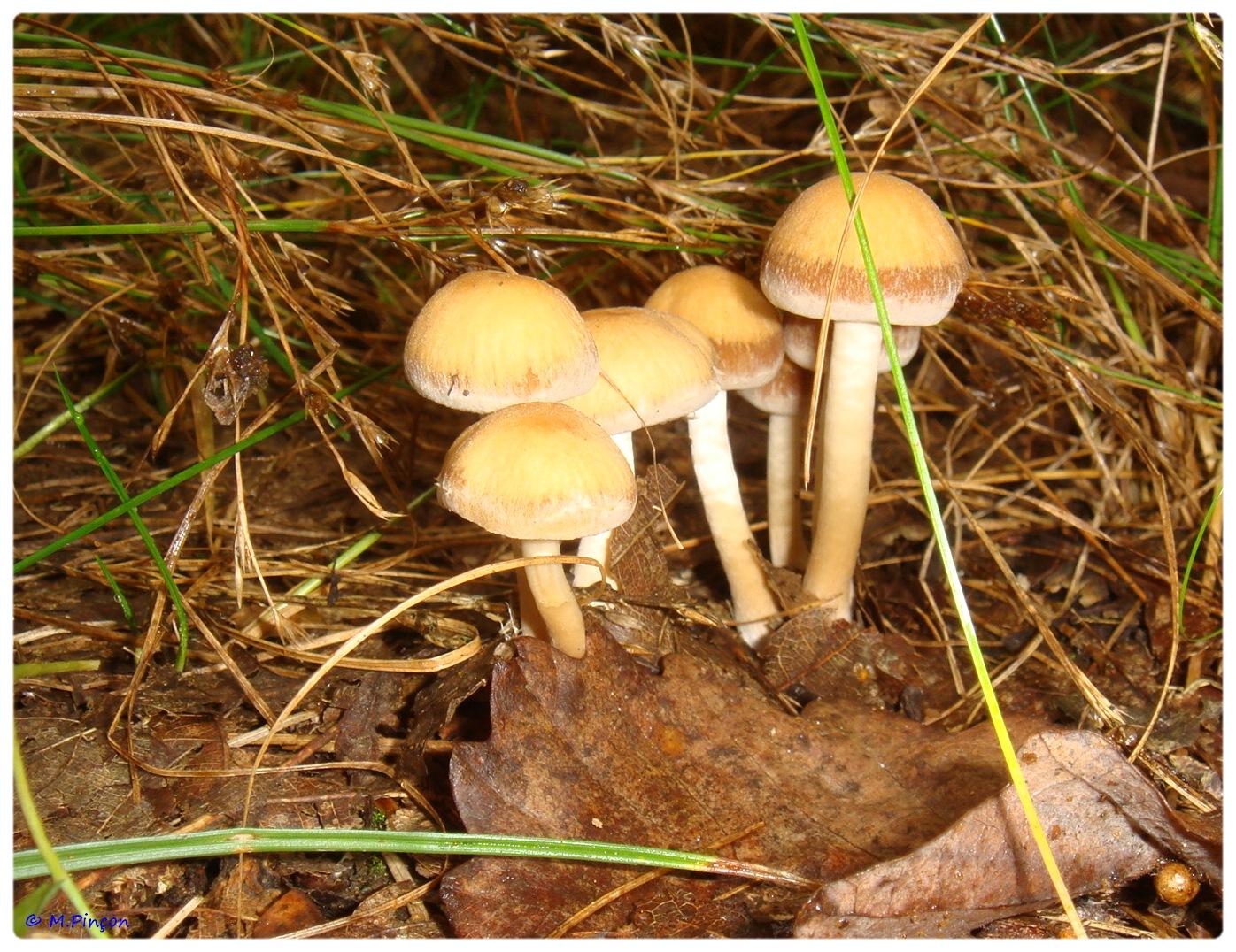 [fil ouvert] les champignons 813847DSC011181
