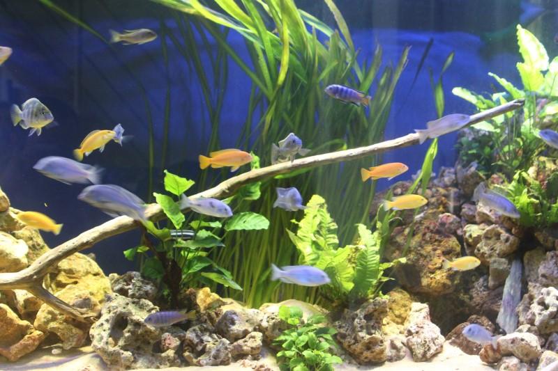 aquarium de 2000L en bois - Page 2 820035IMG0008