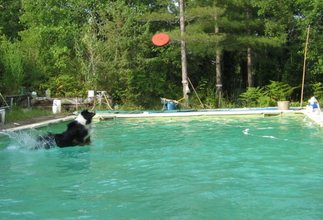 Dogs in the water 820303t2016