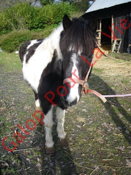 LOONY -  ONC poney né en 2001 - Adopté en juin 2011 par Carole 825106IMGP6548