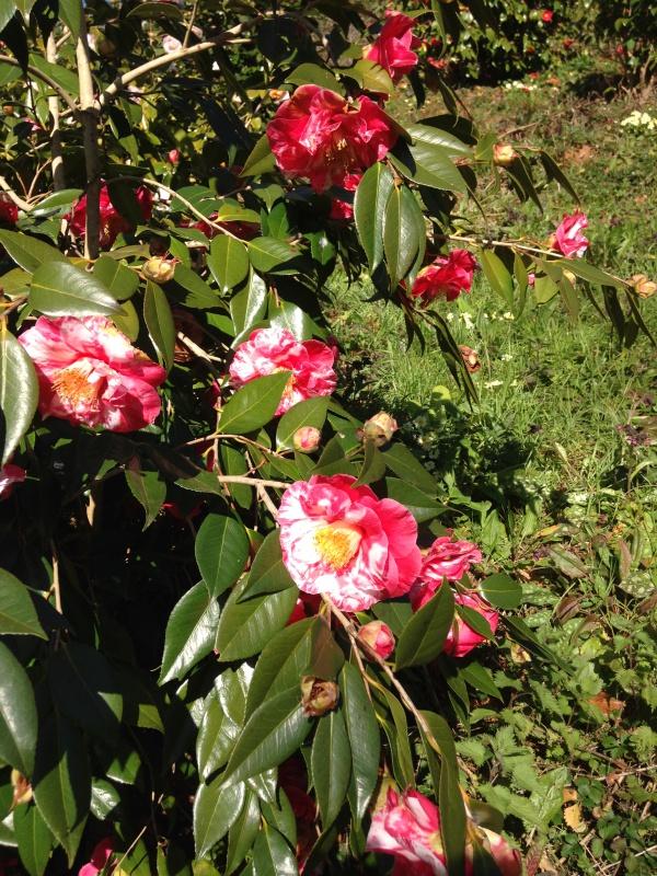 (40) Plantarium et chemin de ronde - Gaujacq 837502IMG0497