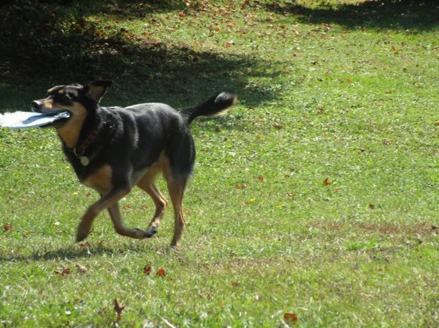 Kami, chien de randonnée - Page 21 842599IMG4800