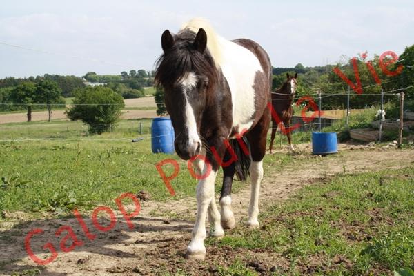 LOONY -  ONC poney né en 2001 - Adopté en juin 2011 par Carole 844561IMG4826