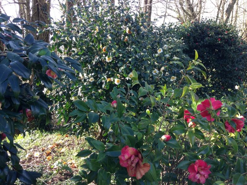 (40) Plantarium et chemin de ronde - Gaujacq 846758IMG0489