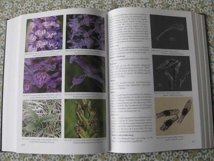 Eccarius - Die Orchideengattung Dactylorhiza 846993IMG3121
