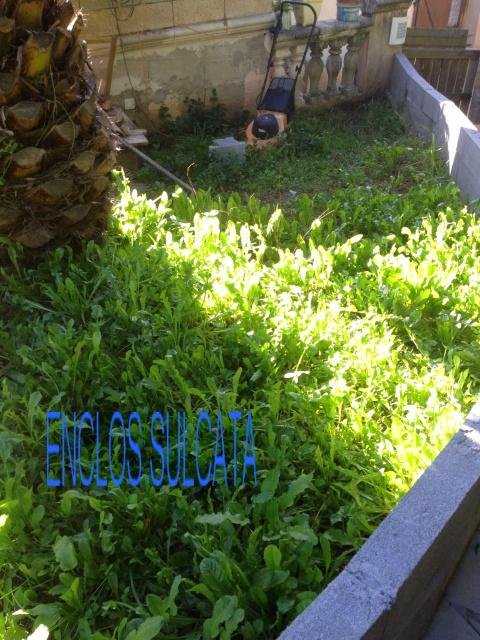 Enclos sulcata/Triunguis 852590Giovanni072
