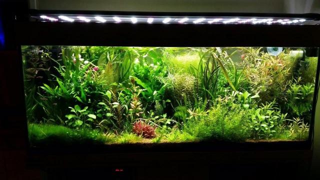 Mes (plus) de 60 plantes dans mon 240 litres - Page 5 85666520141125055926