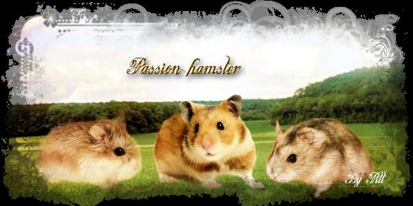 Passion Hamster