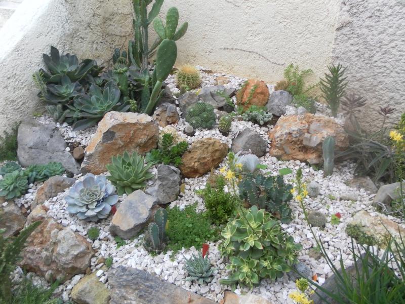 le jardin de syljou - Page 2 866754SAM2383