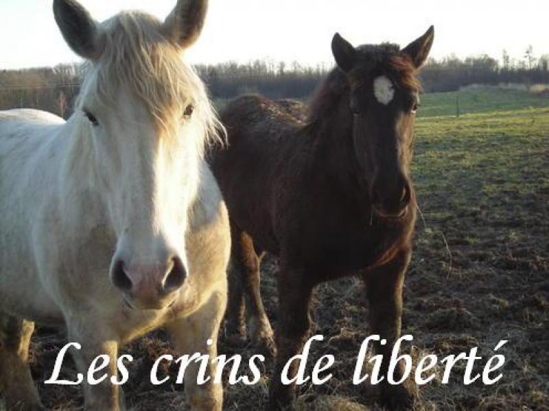 Ulysse des Genets,percheron réservé via rebecca ANGLETERRE (2009)parti... 866992Poulain_percheron_140209__15_