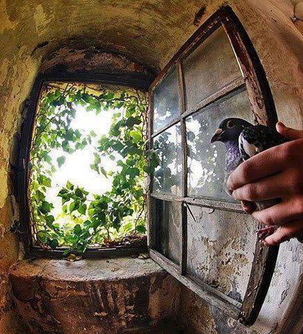 Des fenêtres d'hier et d'aujourd'hui. - Page 6 8680684805815657097401090302111975442n