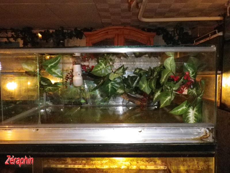 Aménagement d'un aqua-terrarium pour espèce semi-aquatique 87321004janvier20127