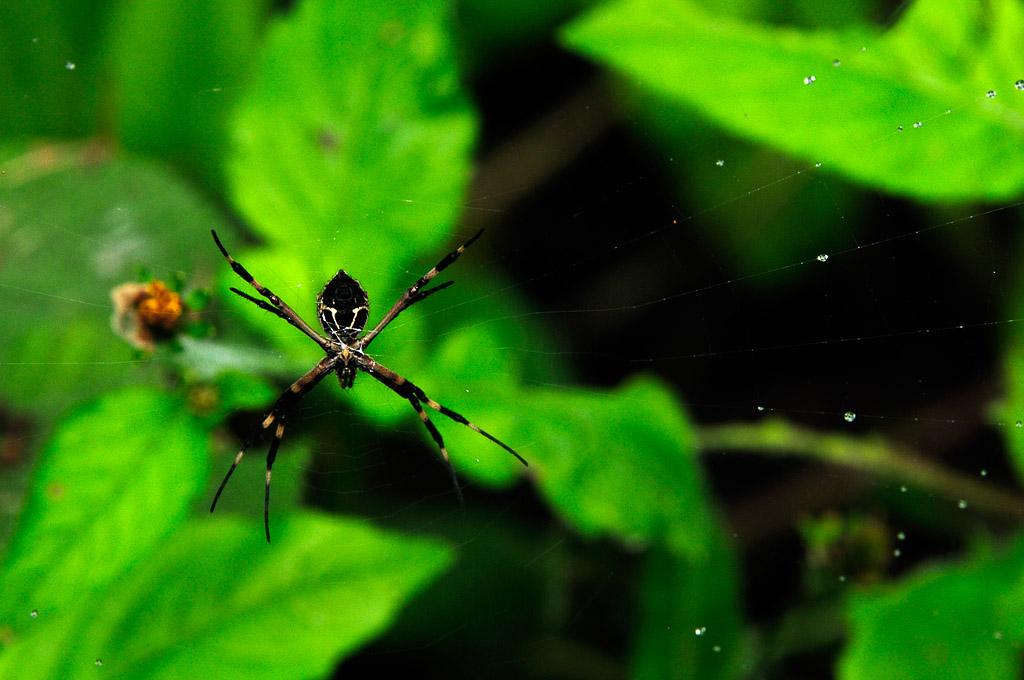 (FIL OUVERT à tous) vous aimez les araignées? 878144Equateur112152