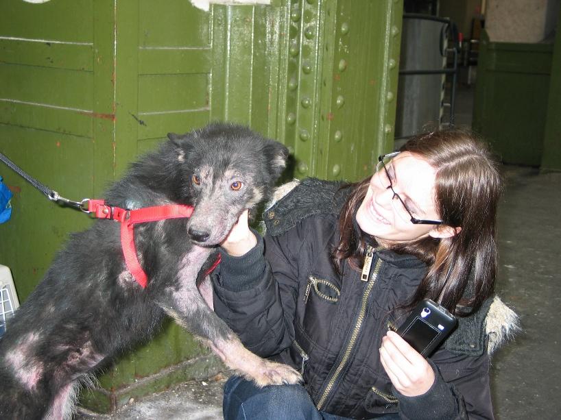 > Mika, un amour de petite chienne, née en mai 2011 - Adoptée 883042704