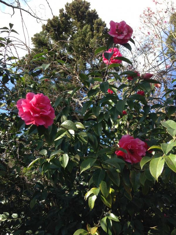 (40) Plantarium et chemin de ronde - Gaujacq 884190IMG0463