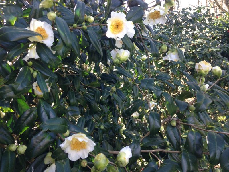 (40) Plantarium et chemin de ronde - Gaujacq 888605IMG0490
